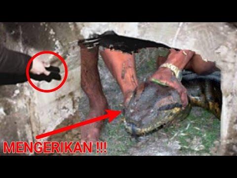 Download Lagu Mengerikan,!! Menggali makam kuno malah temukan ular sebesar ini yg dipercaya ada