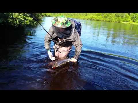 рыбалка форели мурманск