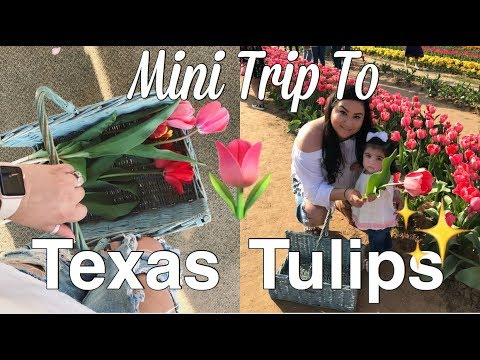 Vlog #66 First Time At Texas Tulips | Tulip Farm | Daisy Heat