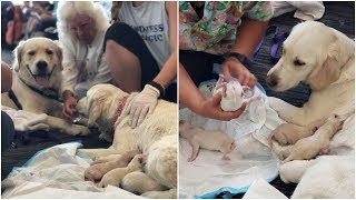 Dog delivers 8 puppies at Florida airport while waiting for a flight