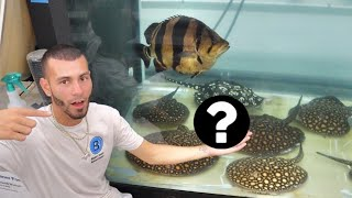$100,000 FISH-TANK! HE HAD a SURPRISE for me!!