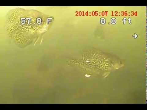 crappie fishing and slow trolling with an underwater camera