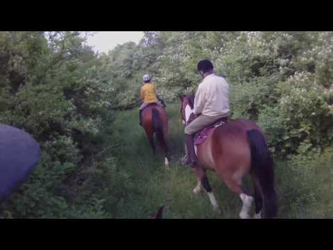Horse Cam - Trail Riding in Virginia