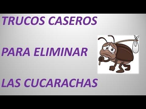 3 remedios caseros para ahuyentar plagas de cucarachas - Remedios caseros para eliminar hormigas en casa ...