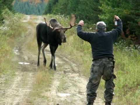 Nelson & Roger Show: The Moose Attack Video