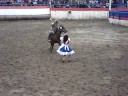 caballo bailando cueca chilena