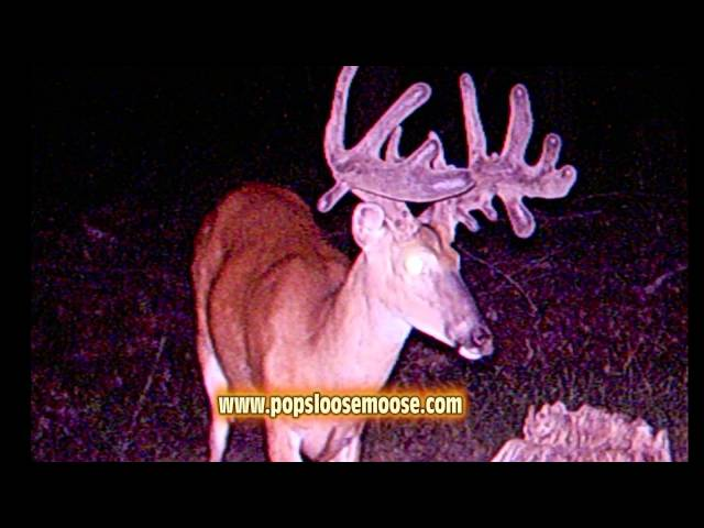 Pops Loose Moose Commercial 1 2014