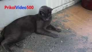 Very Funny Cat Part 1