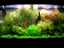 Planted aquarium fish tank - No more stress