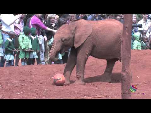 David Sheldrick Elephant Orphanage, Nairobi, Kenya