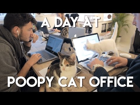 A Day at Poopy Cat Office