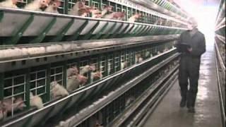 Salubrité des aliments à la ferme en matière d oeufs vidéo 00 24