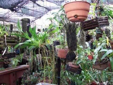 Jardin en uruguay categor a orquideas y bromelias youtube - Plantas para estanques de jardin ...