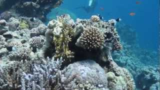 Dive the North Red Sea-Strait of Tiran-Gordon & Jackson Reef