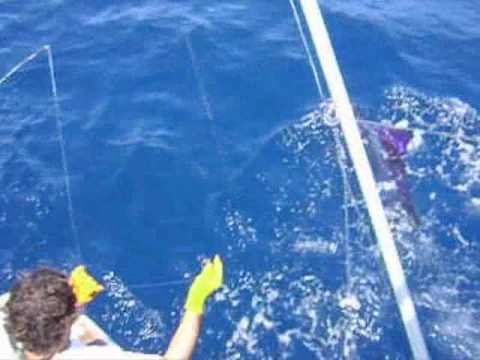 Costa Rica, papagayo sportfishing