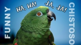 Funny Parrots Laughing - ROFL LOL Amusing!