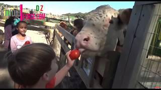 #Funny Children and animals Looked Like It Hurt! Let the laughs begin2019HD