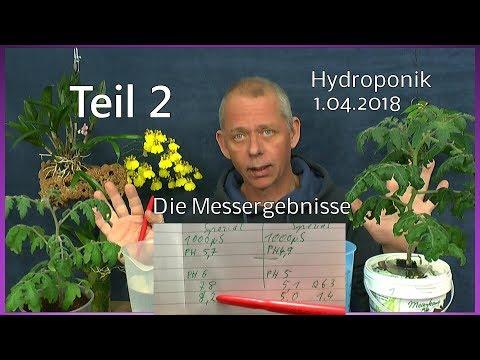 Hydroponik Ergebnisse aus den Experimenten und wie es weiter geht Chili Tomaten Teil 2