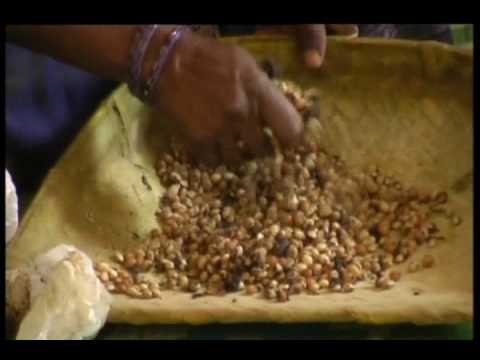 Beans and pulses seed storage method with castor powder in Daasaihyanadoddi, Karnataka