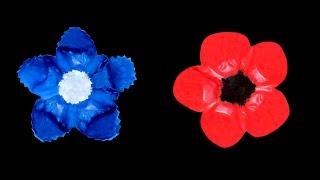 Bleuet Et Coquelicot Pour Le Jour Du Souvenir