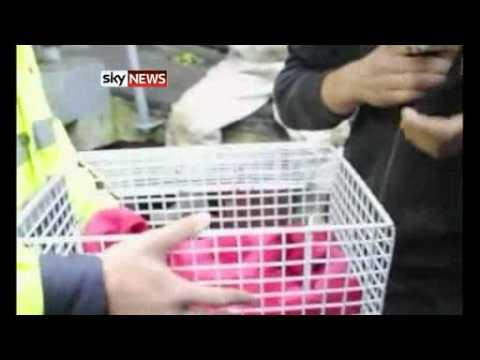 Kitten Trapped In Concrete Tube In Sweden Is Rescued
