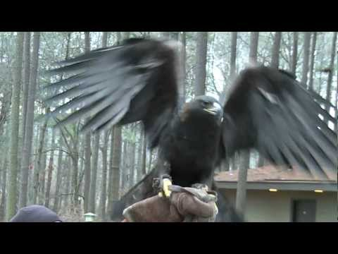 Eagle Awareness at Lake Guntersville State Park 1