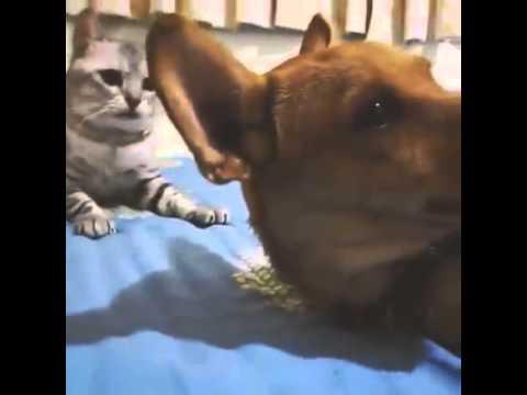 猫パンチの凄さを改めて知る!の巻