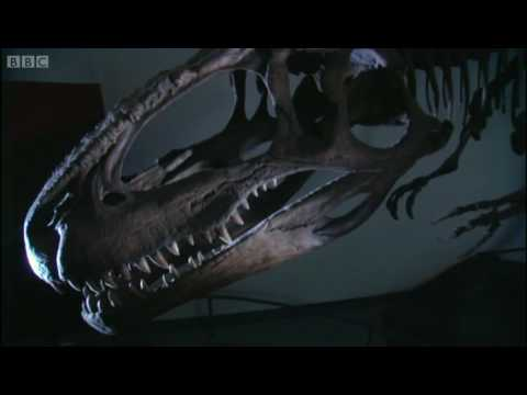 South American mega-dinosaurs - Extreme Dinosaurs - BBC Video