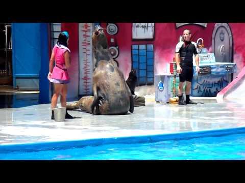 HD Mundo Marino San Clemente del Tuyu Show de lobos focas 3/3  HD