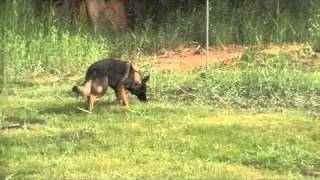 ITC-Dogs Tracking-Workshop