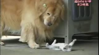 迷い子猫エルちゃんと優しい犬アールくんこの2匹の関係にはある訳が・・・