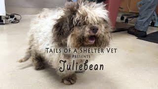 Juliebean - Elderly Dog's Extreme Makeover - Tails of a Shelter Vet