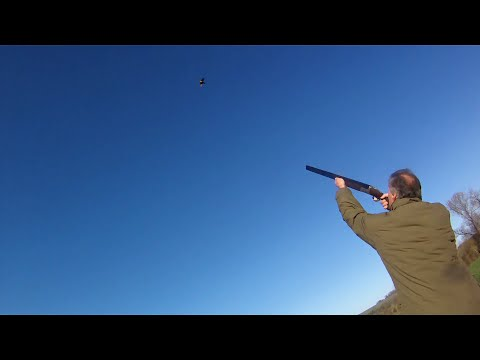 Driven Partridge and Pheasant Shooting