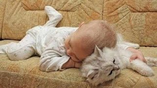 Adorable Cats and Babies Cuddling - Babies Love Cats Compilation