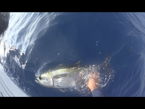 Dania Offshore 05/21/15 King, Blackfin, Grouper on Jigging Trolling and Gog BEST DAY EVER!