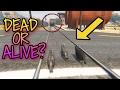GTA 5 Lihat Apakah Kucing Ini Bisa Menghentikan Kereta Api WS Gaming mp3