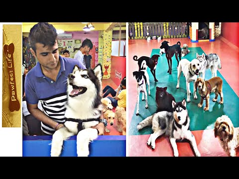 Dog Cafe in Mumbai |Pawfect Life| Pet Dogs| Kailash Ahire Vlogs