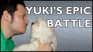 Yuki&#x27;s Epic Battle