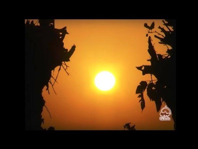 Посмотреть ролик - Арабы Каршинской степи. Быт и традиции арабской общины