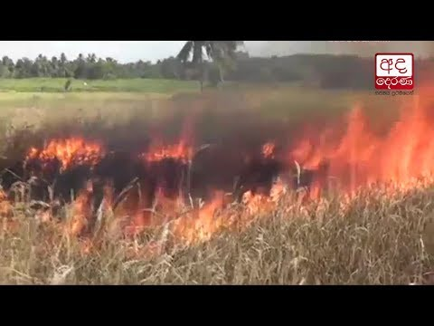 paddy farmers in amp|eng