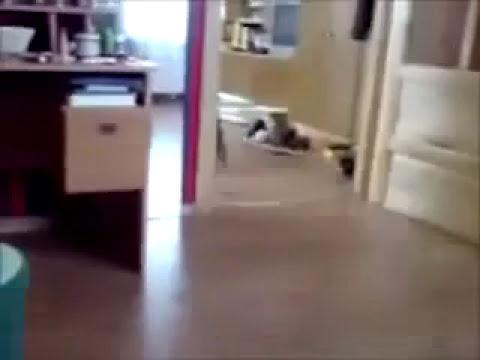 Gatos motorizados xD