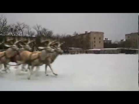 Санта Клаус бежит за санями