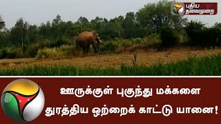 Elephant that entered into Krishnagiri city and chased people! #Elephant