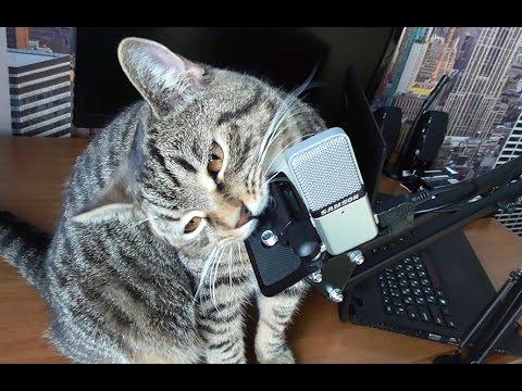 Микрофон самсон (Samson Go Mic) обзор, тест без обработки