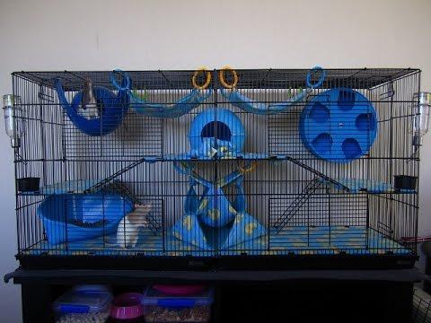 Как сделать полку в клетке для крыс