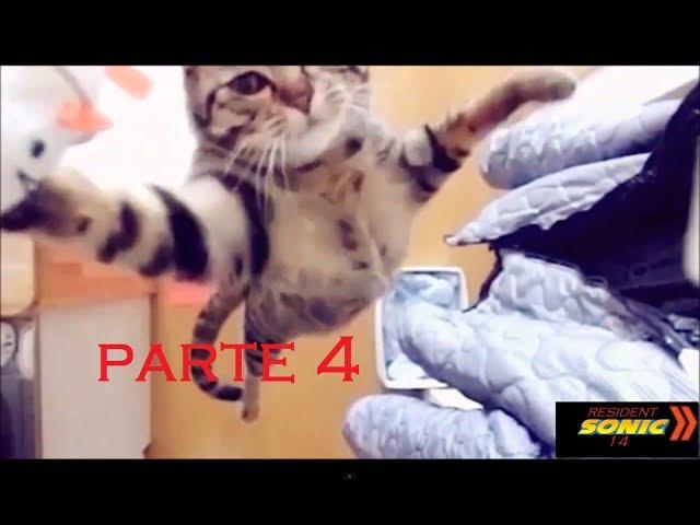 gatos y perros graciosos (loquendo)parte 4