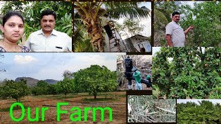 PLEASANT EVENING IN OUR FARM/DIFFERENT TYPES OF FRUIT TREES / ABOUT OUR FARM NEAR RAYACHOTI,KADAPA