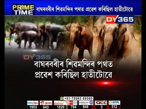 গুৱাহাটীত নিশা বন্যহস্তীৰ মুক্ত বিচৰণ || Guwahati elephant thumbnail