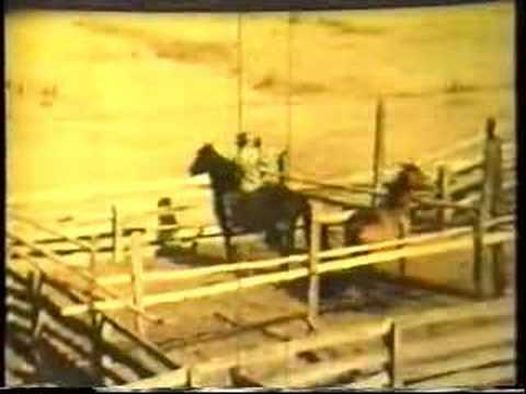 Kel Jeffrey Horse Training Methods Music Videos
