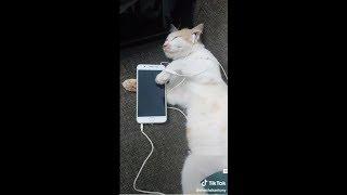പൂച്ചകള് അടക്കി വാഴുന്ന ടിക്ക് ടോക് - Best Cat Kitten Videos Of TikTok Malayalam - JokesMalayalam